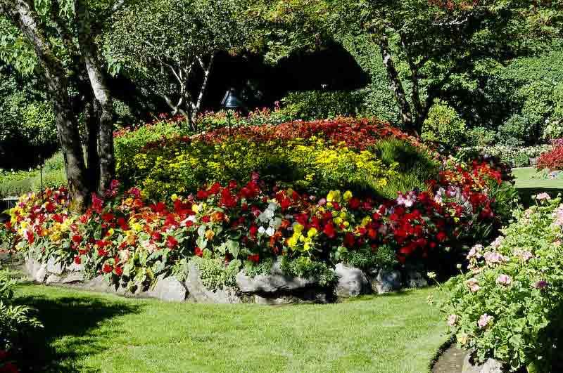 Садовые растения являются настоящим